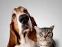 Zoom sur les aliments interdits au chien et au chat
